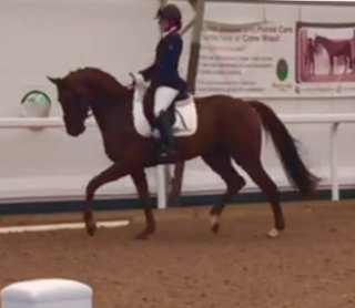 Waverley Federer moves up to Novice with great success!